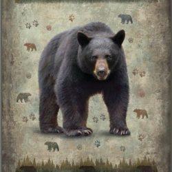 Black Bear db5293-2