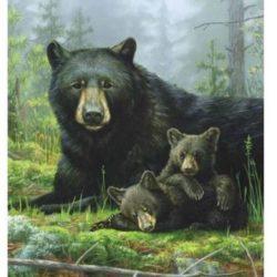 HAUNTMAN NAPTIME BEARS